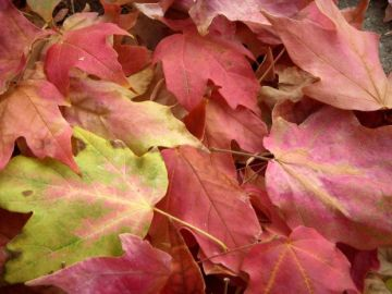Simple Ways to Save Time Raking Leaves