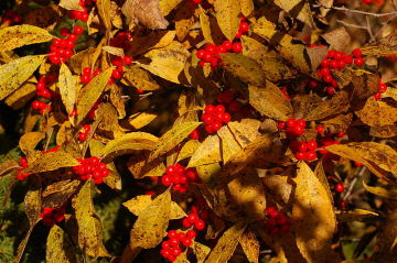 Ways to Add Color to Your Winter Landscaping